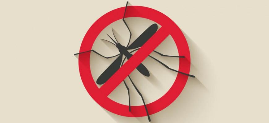 Dengue no Trabalho: como sua empresa pode ajudar na prevenção?